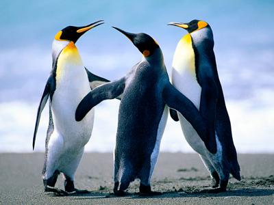 https://www.pccs.ca/wp-content/uploads/2013/08/Penguins-thumbnail.jpg